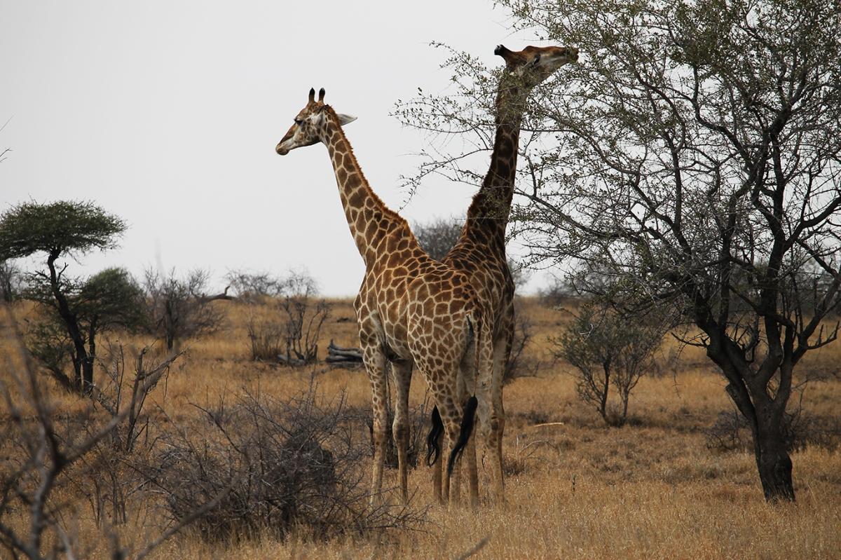 4 Días de Safari I